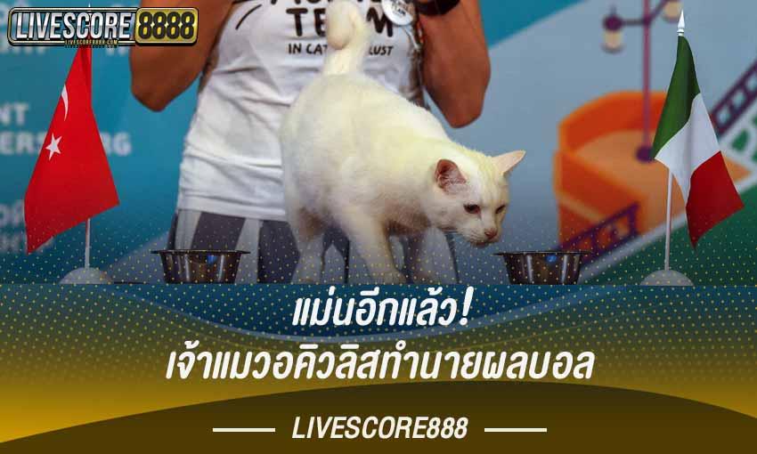 อคิวลิส แมวผู้มาก่อนกาล ทำนายผลฟุตบอลสุดแม่น!